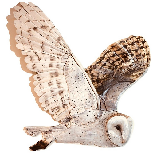 Huge Driftwood Barn Owl