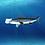 Thumbnail: Driftwood Hammerhead Shark