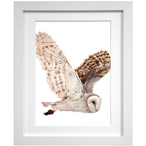 Driftwood Owl Print