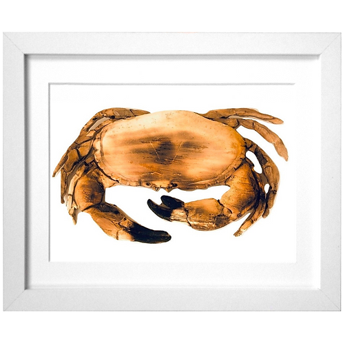 Driftwood Crab Print