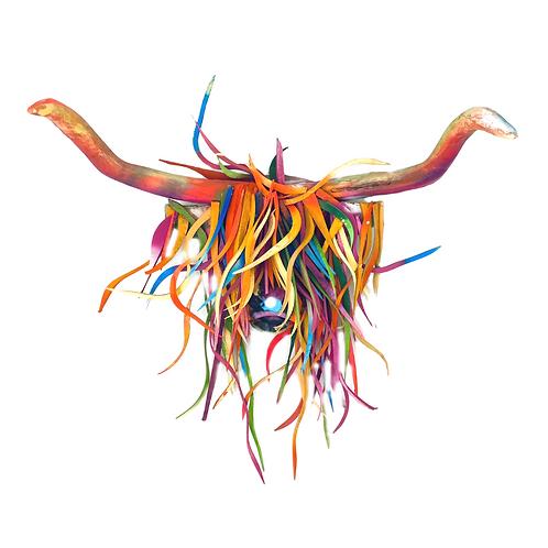 Highland Cow/Bullock In Colour