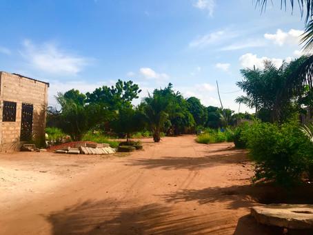 Des champignons au Togo ?