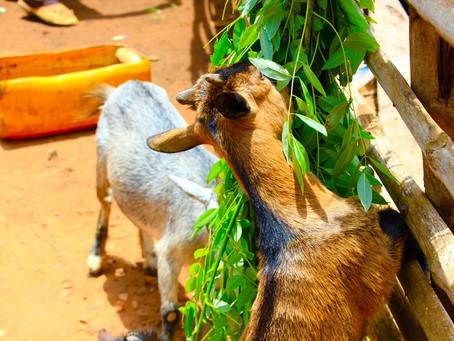 Pourquoi les vétérinaires luttent aussi contre la pauvreté ?