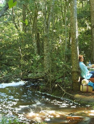 forest-picnic.jpg