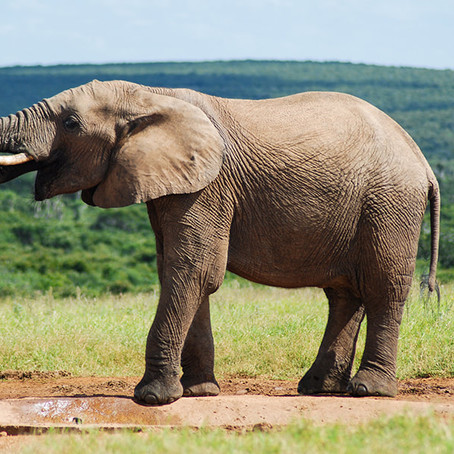 Addo National Park: Guided Safari