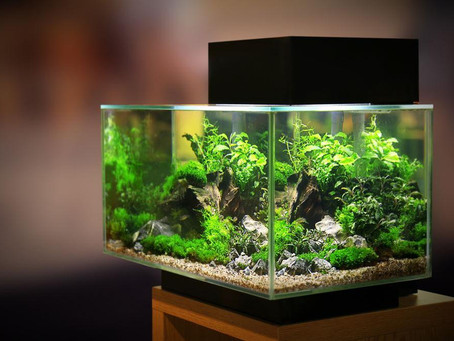 In stressful times, having a home aquarium could be a benefit - Wave Aqua South Africa