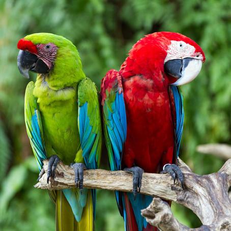Montecasino Bird & Wildlife Park