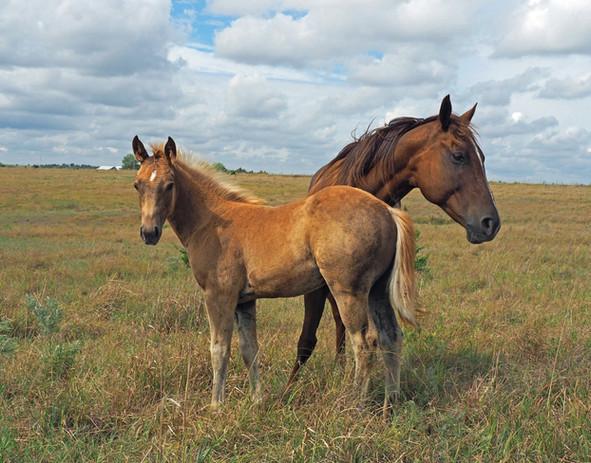 horse pair 3.jpg