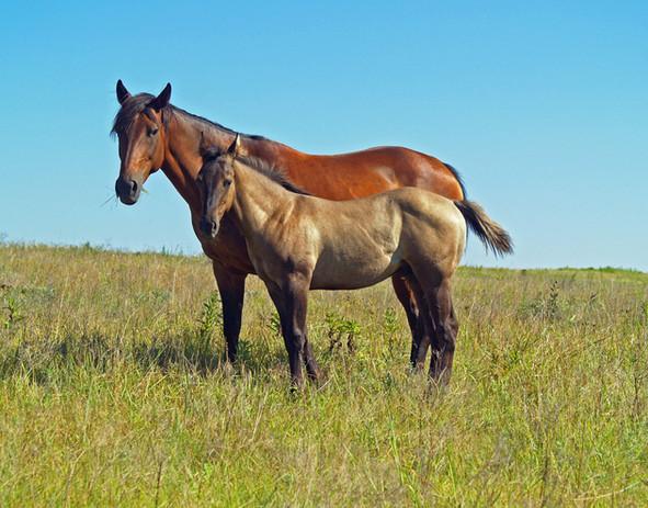 horse pair 13.jpg