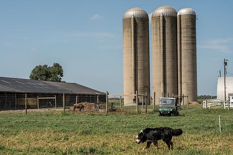 copper flats bison co. local farm.jpeg