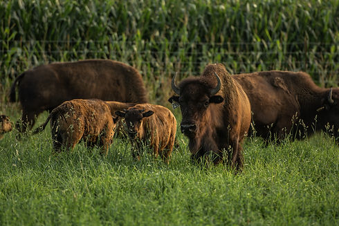 All natural, grass-fed, sustainable, pas