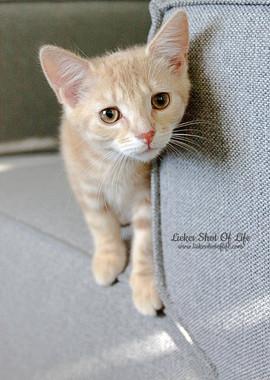 Kitten Caramel