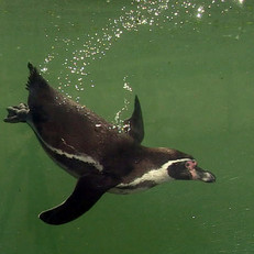 penguins4.jpg