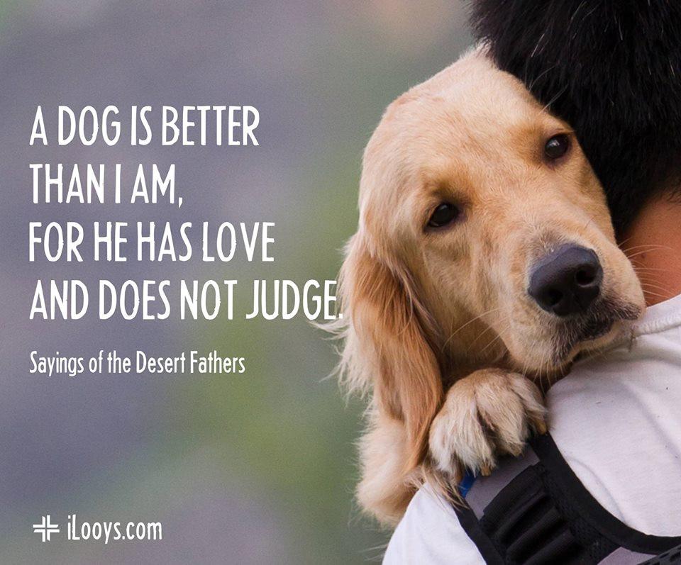 Do not judge, dog, iLooys