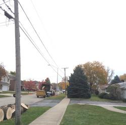 Tree pruning work