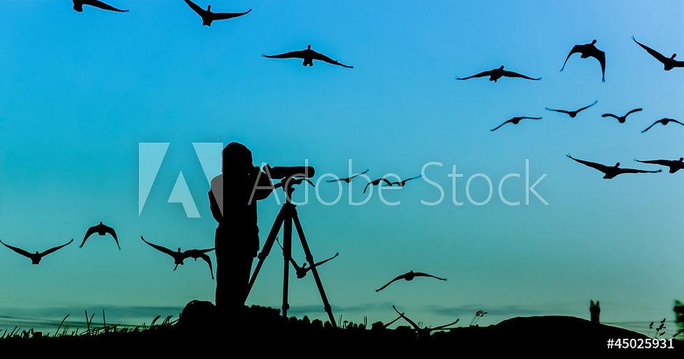 EVENT bird watching.jpeg