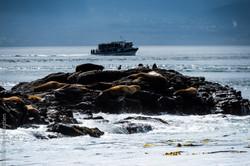 sea lions-7289