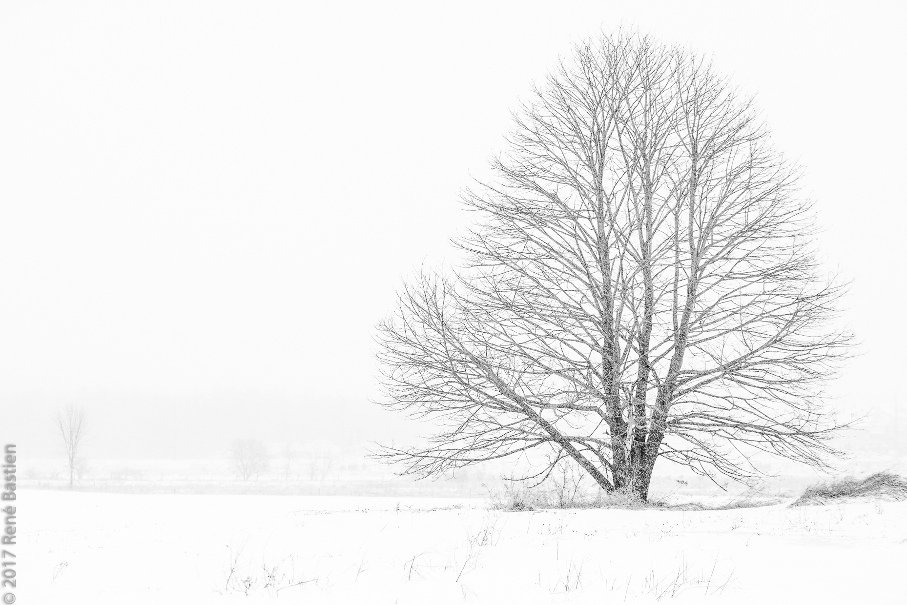 Lone tree in snowstorm