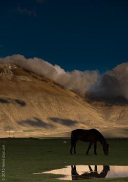 Horse Castellucio plain