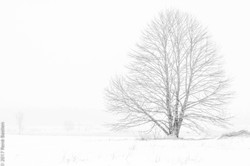 Winter storm out in a field
