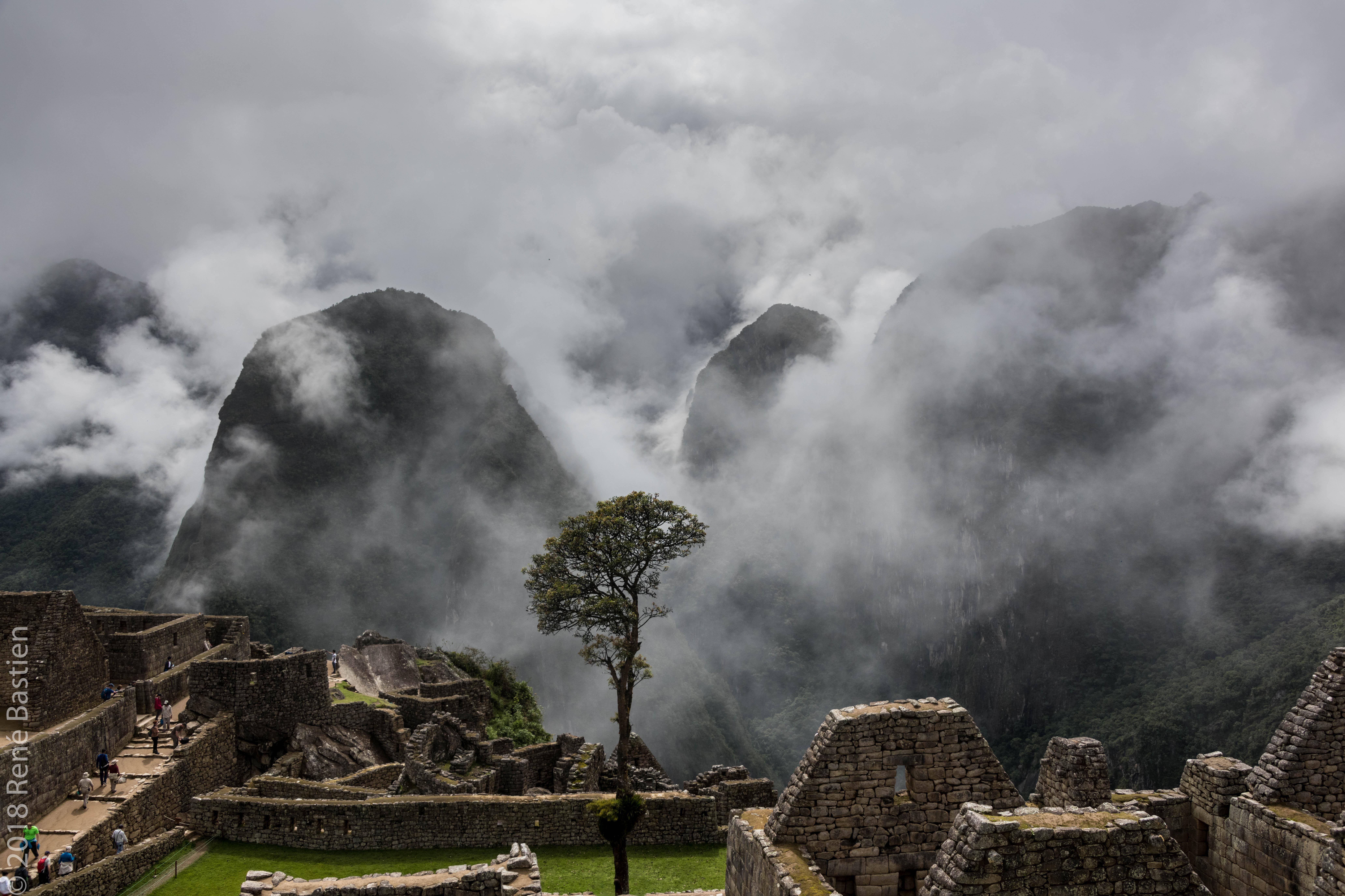Machu Picchu lone tree-