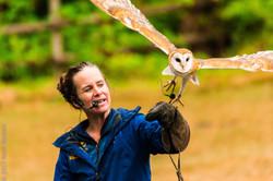 barn owl-6914