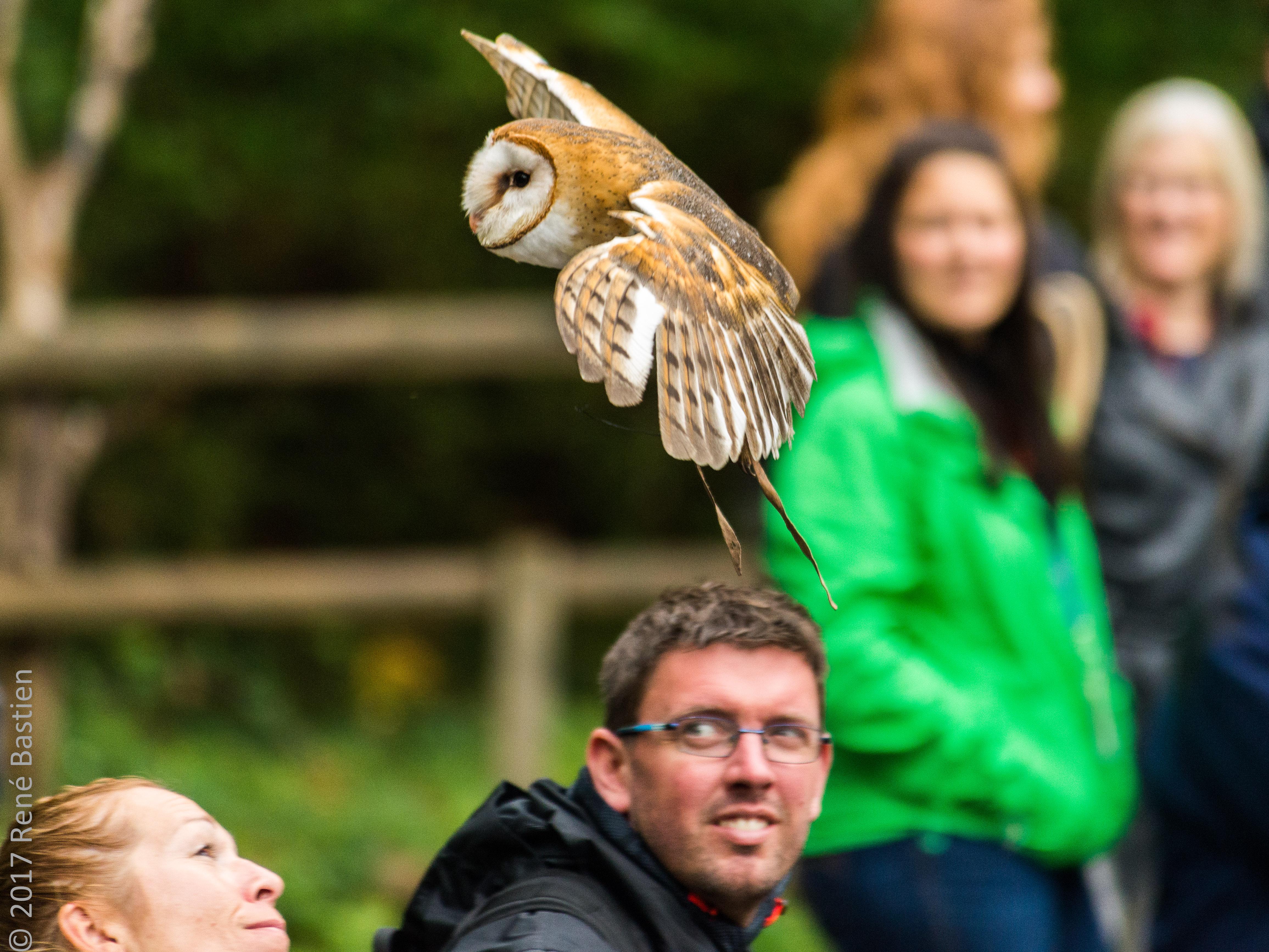 barn owl-6945