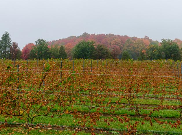 Ste-Pétronille_winery-7770.jpg
