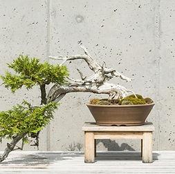 interior design landscape.jpg