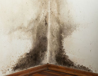 Damp problems in the home