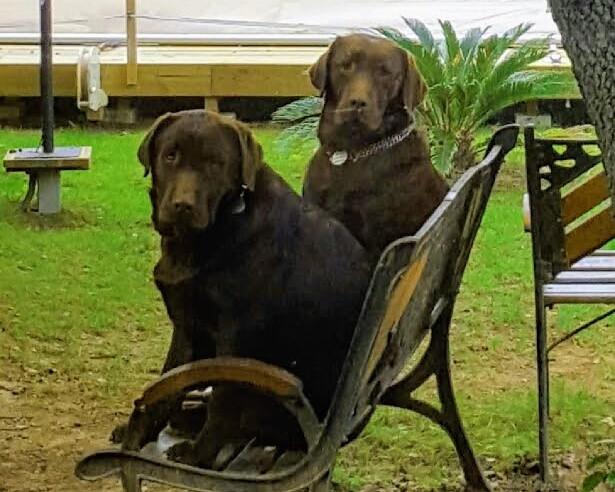 Madisson (mère) et Kruger (père)