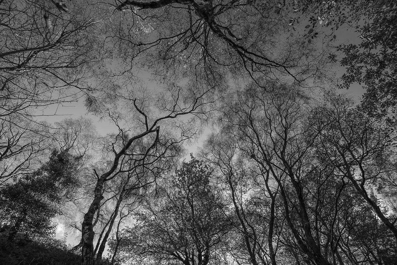 Black and White Woodland Photography