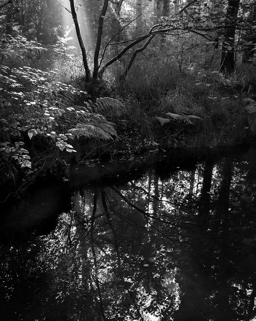 NewForest_Morning_Mist.jpg