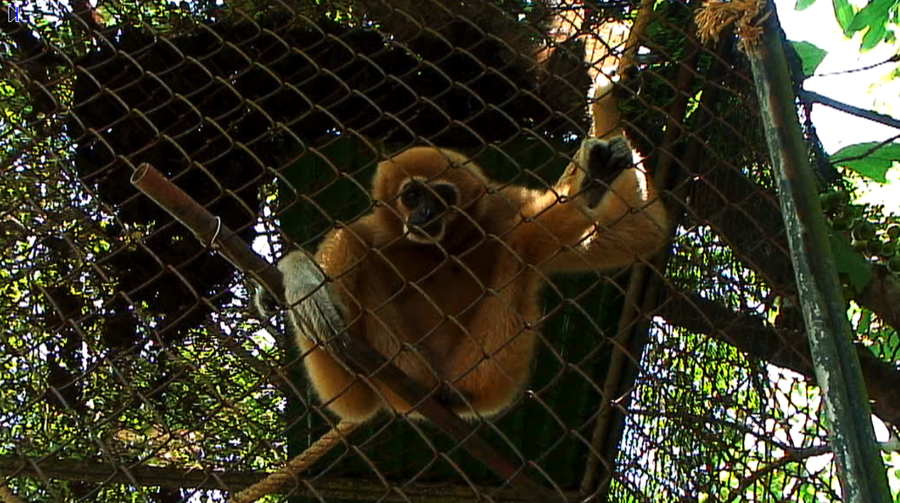 GIBBON in rehab