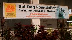 SOI DOGS, PHUKET