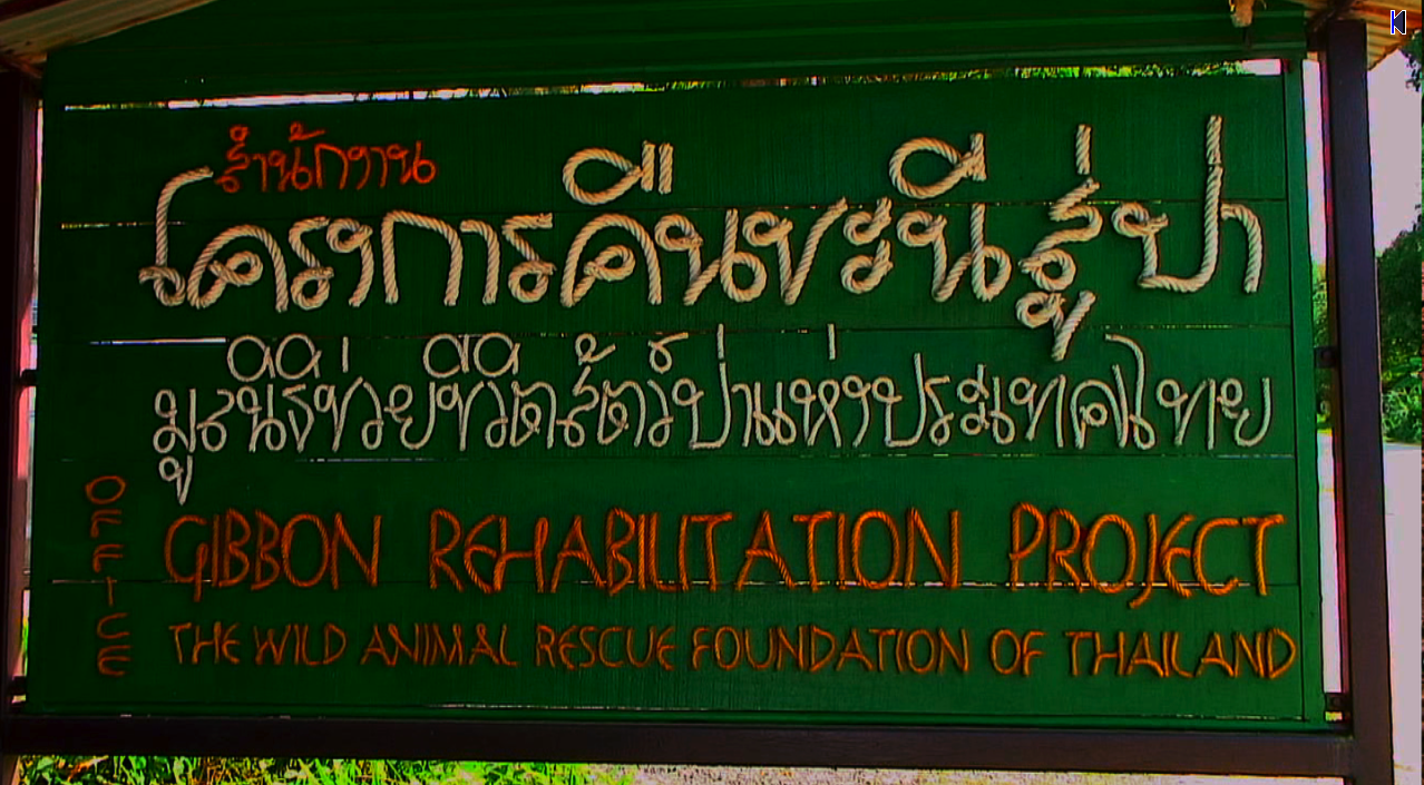 Gibbon Rehabilitation Project,Phuket
