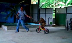 gibbon on bike