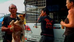 Soi Dogs, Thailand