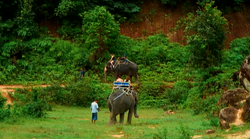 Tourist attractions-elephant rides