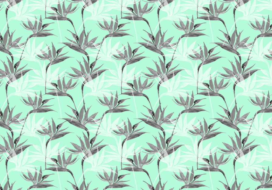 502 aqua birds of paradise small screen