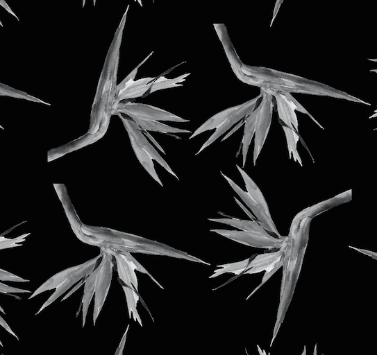 423 black and white birds of paradise swatch
