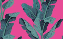 487 hot pink banana leaves