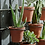 Thumbnail: *Due in August* Jara Terracotta Wall Hung Planter