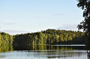forest-2473246_960_720.jpg