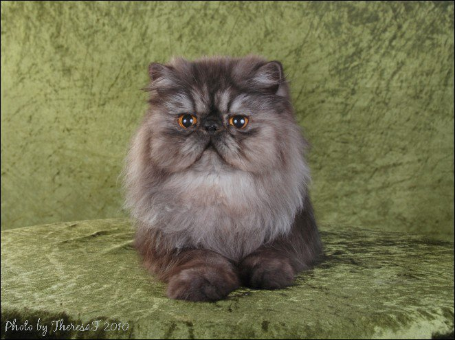 2010 CAT OF THE YEAR