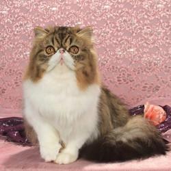 3rd Kitten 2018