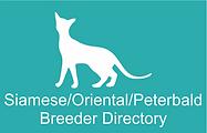 CFSA Siamese Oriental Peterbald