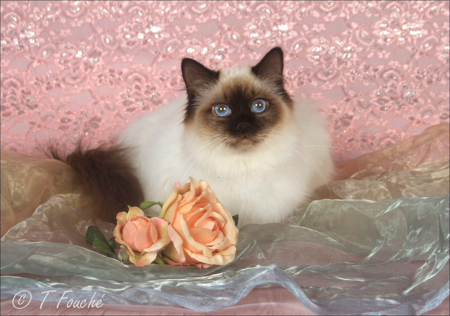 9th Kitten 2018