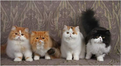 2017 ADULT LITTER OF THE YEAR