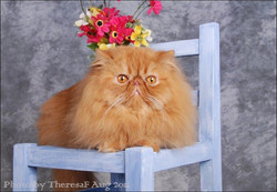2011 CAT OF THE YEAR